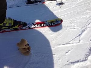 bear-snowboarding