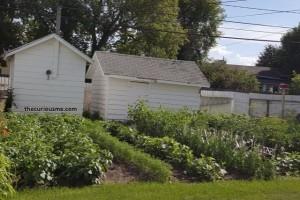 thecuriousme-garden-
